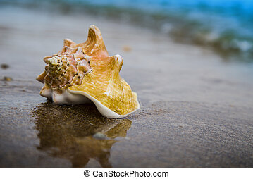Big seashell on sand of the beach in sunlight, background, close up