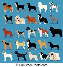Big set of dogs