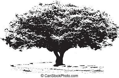 B/W big tree