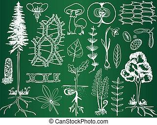 Biology plant sketches on school board - botany hand-drawn illustration