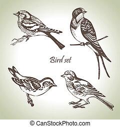 Bird set, hand-drawn illustration