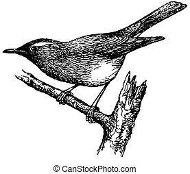 Bird Siberian Thrush