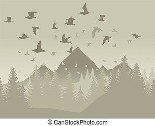 Birds in mountains