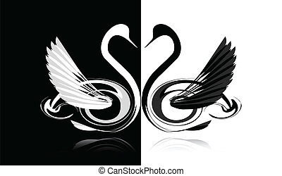Black and white swans in love