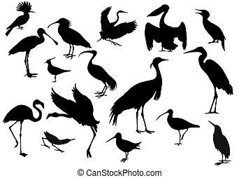 Black birds isolated