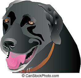 Black Labrador head profile, over white and isolated for many usages.