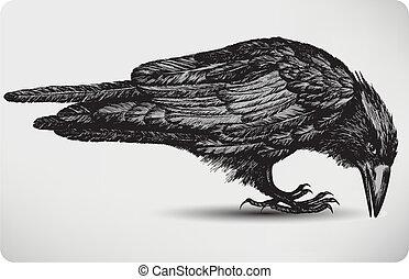 Black raven bird, hand-drawing. Vector illustration.