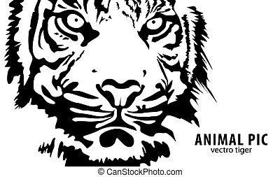 black vector tiger on white background