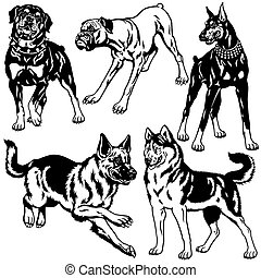 black white set with dogs