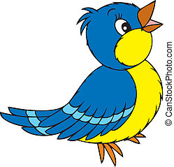 blue and yellow bird, on a white background