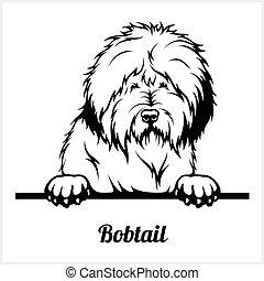 Bobtail - Peeking Dogs - breed face head isolated on white