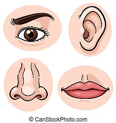 Vector illustration of depicting the 4 senses