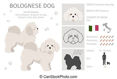 Bolognese dog clipart. Different coat colors and poses set.  Vector illustration