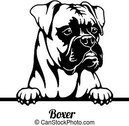 Boxer Peeking Dog - head isolated on white