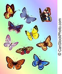 Colorful Butterflies. Digital illustration. Gradient Mesh. Filters.
