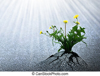 Plants emerge though asphalt, symbol for bright hope of life and success.