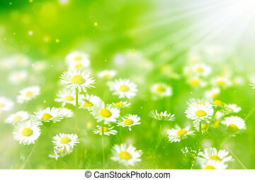 bright summer background with white daisies