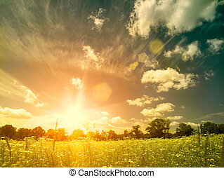 Bright summer sunset over wild meadow. Natural backgrounds with beauty chamomile flowers