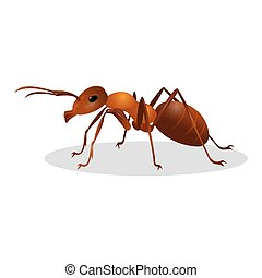 Brown ant isolated on white. Insect icon. Termite. Eusocial insect. Brown animal insect creature with elbowed antennae and t distinctive node-like structure that forms their slender waists. Vector