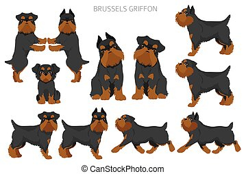 Brussels griffon clipart. Different coat colors and poses set.  Vector illustration