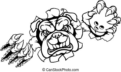 A bulldog angry animal sports mascot holding a ten pin bowling ball and breaking through the background with its claws
