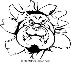 Bulldog mascot breakthrough