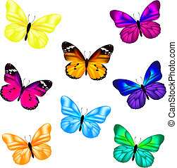 Butterfly Set, Isolated On White Background, Vector Illustration