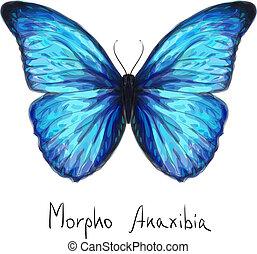 Butterfly Morpho Anaxibia. Watercolor imitation. Vector illustration.