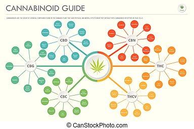 Cannabinoid Guide horizontal business infographic