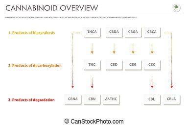 Cannabinoid Overview horizontal business infographic