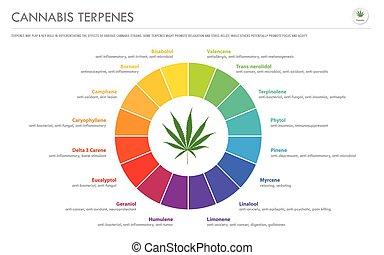 Cannabis Terpenes horizontal business infographic