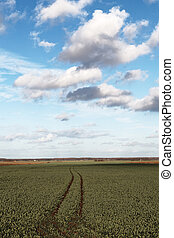 Canola field.