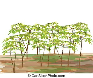cassava plant on white background vector design