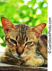Cat looking.