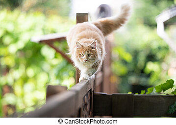 cat walking on fence outdoors