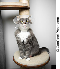 cat wearing cone protection after surgery