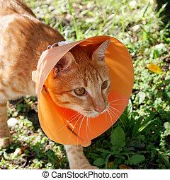 Cat wearing plastic cone collar