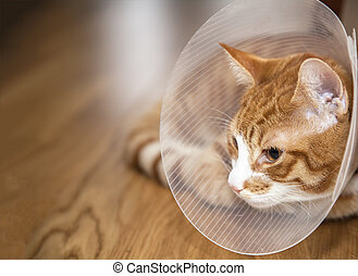 Cat with cone on a floor