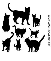 Cats Animal