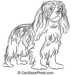 Cavalier King Charles Spaniel Drawing
