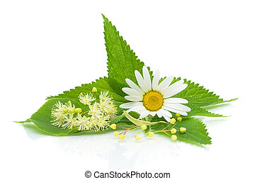 chamomile, nettle leaves and lime flowers on a white background close-up of the reflection