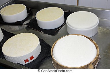 cheese factory for the production of cheese and fresh caciotta cheese in various forms