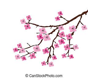 vector blossom branch
