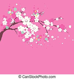 cherry branch, flowers tree , on a white
