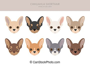 Chihuahua dogs different coat colors. Chihuahuas characters set