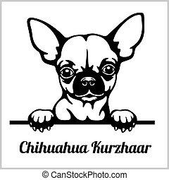 Chihuahua Kurzhaar - Peeking Dogs - breed face head isolated on white