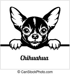 Chihuahua - Peeking Dogs - - breed face head isolated on white
