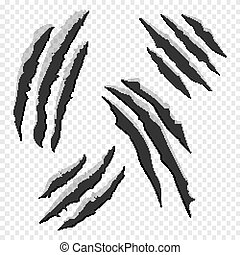 Claws scratches isolated on transparent background. Animal claw scratch like lion, tiger, bear, cat. Vector illustration