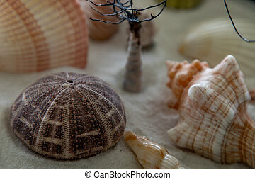 Close-up of seashell on sand background.