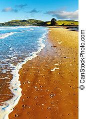 Coastal view, Pacific coast of New Zealand